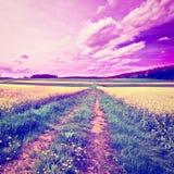 Estrada de terra Foto de Stock Royalty Free