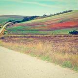 Estrada de terra Fotos de Stock