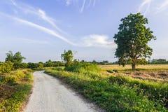 Estrada de terra ao campo Imagens de Stock