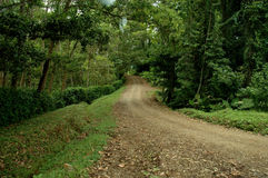 Estrada de terra através da floresta fotos de stock