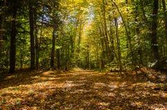 Estrada de terra através da floresta fotografia de stock