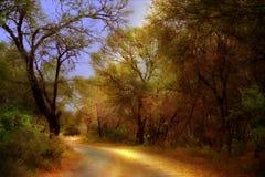 Estrada de terra através das árvores Fotos de Stock Royalty Free