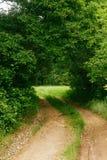 Estrada de terra através das árvores no verão que deixa uma volta Fotos de Stock