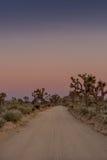 Estrada de terra através de Joshua Tree no crepúsculo Fotos de Stock