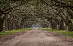 Estrada de terra através do túnel de Live Oak Trees Fotografia de Stock