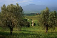 Estrada de terra branca através das oliveiras Fotografia de Stock Royalty Free