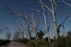 estrada de terra cercada por árvores secas Foto de Stock Royalty Free