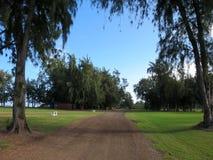 Estrada de terra com alinhado com árvores de pau-ferro preto Imagens de Stock