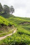 A estrada de terra conduz à plantação de chá Fotos de Stock