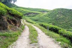 A estrada de terra conduz à plantação de chá Foto de Stock Royalty Free