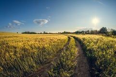 Estrada de terra da paisagem em um campo de sementeira no por do sol fotos de stock