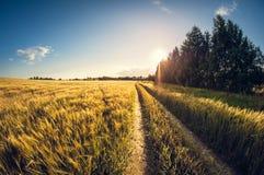 Estrada de terra da paisagem em um campo de sementeira no por do sol imagens de stock