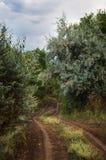 Estrada de terra das madeiras fotografia de stock royalty free