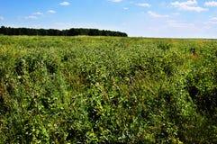 Estrada de terra do campo Céu azul e nuvens Fotografia de Stock Royalty Free