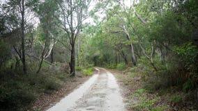 Estrada de terra e árvores Foto de Stock Royalty Free