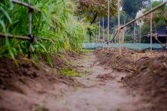 Estrada de terra em um berçário da planta Imagens de Stock