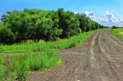 A estrada de terra entre árvores e campos ilustração royalty free