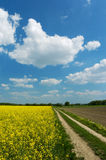 Estrada de terra entre campos Fotos de Stock Royalty Free