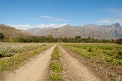 Estrada de terra entre campos lavendar não na flor Fotos de Stock