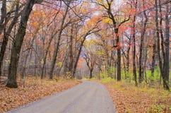 Estrada de terra, floresta do bordo, outono fotografia de stock