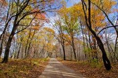 Estrada de terra, floresta, outono imagem de stock