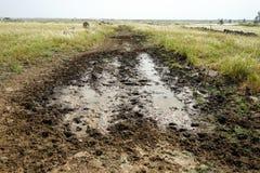 Estrada de terra molhada fotografia de stock royalty free