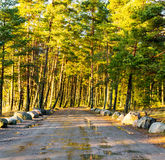 Estrada de terra molhada que atravessa uma floresta Imagem de Stock
