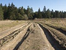 Estrada de terra na floresta Imagem de Stock Royalty Free