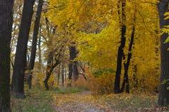 Estrada de terra na floresta do outono, folhas amarelas nas árvores e na terra fotos de stock