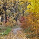 Estrada de terra na floresta do outono, folhas amarelas nas árvores e na terra imagens de stock