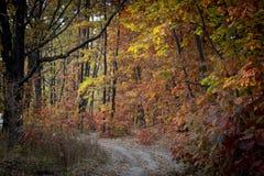Estrada de terra na floresta do outono, folhas amarelas nas árvores e na terra fotografia de stock royalty free