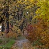 Estrada de terra na floresta do outono, folhas amarelas nas árvores e na terra fotografia de stock