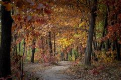 Estrada de terra na floresta do outono, folhas amarelas nas árvores e na terra imagens de stock royalty free