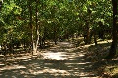 Estrada de terra na floresta do verão Fotos de Stock Royalty Free