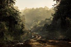 Estrada de terra na selva Fotos de Stock Royalty Free