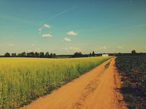 Estrada de terra no campo Foto de Stock Royalty Free