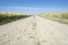 Estrada de terra no campo de trigo Fotos de Stock