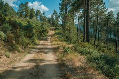 Estrada de terra no terreno montanhoso coberto por arbustos e por ?rvores foto de stock
