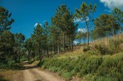 Estrada de terra no terreno montanhoso coberto por arbustos e por ?rvores fotos de stock royalty free