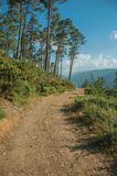 Estrada de terra no terreno montanhoso coberto por arbustos e por ?rvores fotografia de stock