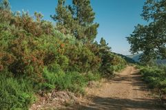 Estrada de terra no terreno montanhoso coberto por arbustos e por ?rvores imagens de stock royalty free