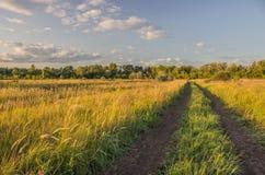 Estrada de terra nos campos fotografia de stock royalty free