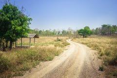 Estrada de terra para a floresta foto de stock royalty free