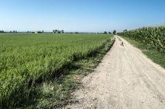 Estrada de terra pela rota do canal de Urgell Imagens de Stock