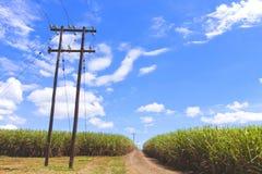Estrada de terra que corre através de Sugar Cane Field Foto de Stock Royalty Free
