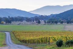 Estrada de terra que passa através do vinhedo no outono País australiano Fotos de Stock Royalty Free