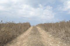 A estrada de terra rural conduz através da pastagem seca contra o céu azul Fotografia de Stock Royalty Free