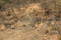 Estrada de terra seca com árvores da acácia imagem de stock