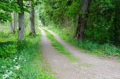 Estrada de terra verde Fotografia de Stock Royalty Free