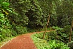 Estrada de terra vermelha que conduz na floresta, Açores Fotografia de Stock Royalty Free